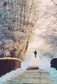В центральных районах Владимирской области минувшей ночью выпал снег