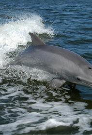 У финских берегов впервые за почти 70 лет заметили дельфинов-афалин