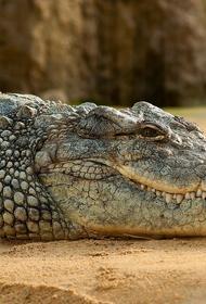 Старый аллигатор скончался в Московском зоопарке