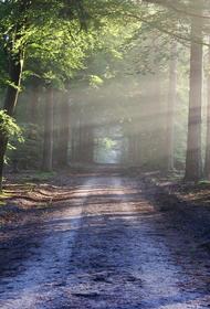 В Приморье отец забрал детей в лес, чтобы «спасти» от коронавируса