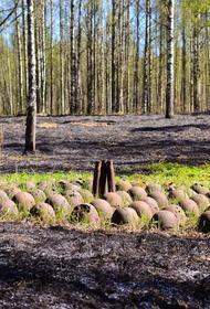 В Ленинградской области хотят создать мусорный полигон на костях незахороненных солдат войны