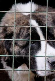Что увидели волонтёры после возвращения в приюты для животных