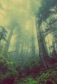 В Волгоградской области нашли пенсионерку, которая заблудилась и провела две ночи в лесу