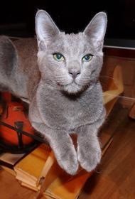 Латвийский ветеринар: С котами обязательно нужно разговаривать