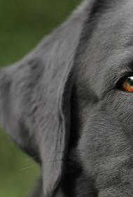 В Омске женщина выбросила пса в мусоропровод, ей грозит условный срок