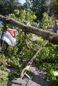 Ветер повалил около 10 деревьев в Москве
