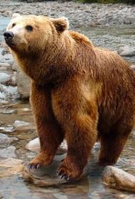 На Камчатке медведь растерзал местного жителя