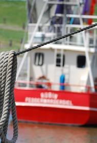Власти Краснодарского края запретили ловить в море мидий и креветок
