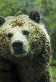 В Иркутской области полицейские спасли пожилую пару от медведя