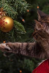 Экономист заявил, что сокращать новогодние каникулы из-за коронавируса не стоит