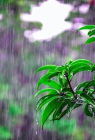 Синоптики прогнозируют спад жары в Москве к выходным после ливневых дождей