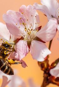 В Красногорске пчеловод спас жителей от нашествия пчёл