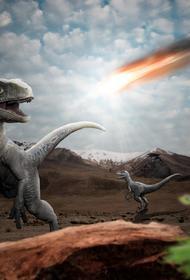 Палеонтологи обнаружили в Японии скорлупу самого маленького известных науке яиц динозавров