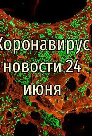Коронавирус 24 июня: опасная Россия для ЕС, «кунг-флю» от Трампа и первые данные о введении вакцины