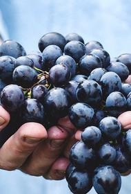 Российским вином будет считаться напиток, произведенный из отечественного винограда