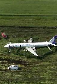 Из-за свалок над аэропортом Жуковский продолжают летать птицы. Ничего не изменилось, но в следующий раз может не повезти