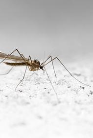 Ученый объяснил, в каком случае малярийные комары опасны для здоровья людей