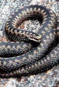 В Латвии активизировались змеи