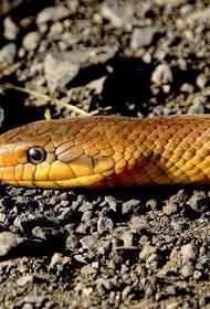 Под Оренбургом мужчина нашел в своей машине метровую змею