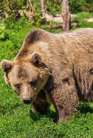 Видео, как на границе России и Китая подрались два медведя