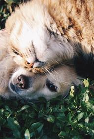 Ветеринары предупредили, что пища с обеденного стола может причинить вред животным