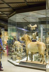 Дарвиновский музей подготовил новую увлекательную онлайн-выставку