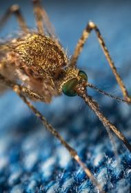 Биолог рассказала, что спекуляция на тему комаров никак не связана с коронавирусом