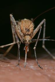 Эксперт рассказал, могут ли комары переносить коронавирус