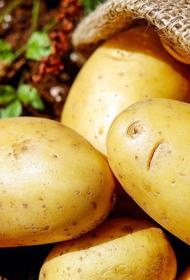 Девушка после трех месяцев карантина обнаружила в квартире «картошку-мутанта»