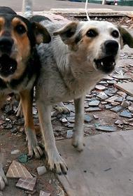 Опубликовано видео, как в Тольятти стая собак напала на детей, играющих на детской площадке
