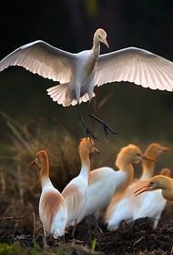 Амурская область: птенца, выпавшего из гнезда, вернули в дикую природу
