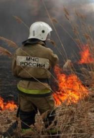 В Воронежской области произошло сразу пять лесных пожаров