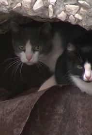 Депутат МГД Козлов: Открытие продухов в московских домах спасёт жизни тысяч бездомных кошек