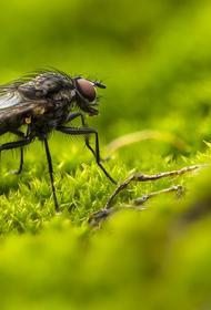 Врач перечислил опасных насекомых