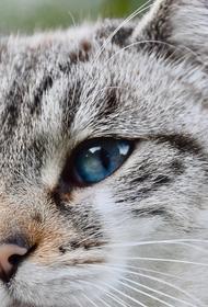 В Австралии хозяева запустили стиральную машину вместе с котом