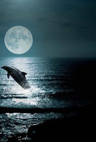 Анапа: небольшого дельфина, который выбросился на берег одного из пляжей Анапы, спасли отдыхающие
