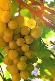 В России могут появиться специализированные винодельческие ярмарки