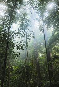 Вертолет с гуманитарным грузом пропал в джунглях Амазонии