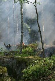 Лесной пожар подбирается к складу боеприпасов ВС Украины в Луганской области