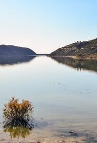В Химкинском водохранилище из-за разлива нефтепродуктов погибли краснокнижные сомы
