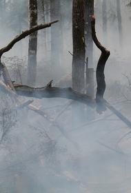 Лесной пожар потушили под Геленджиком