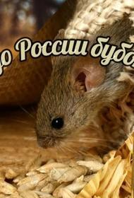 Бубонная чума в Монголии: как избежать заражения в России