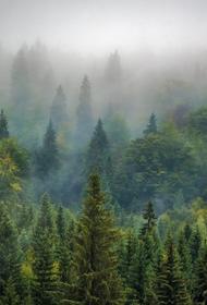 На Сахалине в лесу найдено тело пропавшей четыре дня назад девочки