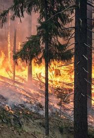 Чрезвычайная пожароопасность сохраняется в Крыму
