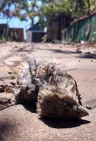 В США на выборы пригласили мертвую кошку