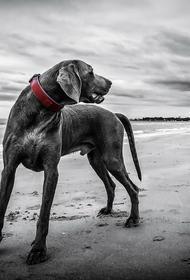 Специалист рассказала, что необходимо предпринять при нападении агрессивной собаки
