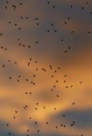 Специалист назвала насекомых, способных доставить больше проблем, чем комары