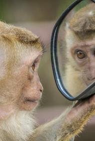 В Геленджике обезьяна пришла в школу. Из кресла охранника ее отправили в зоопарк
