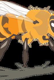 В Кемеровской области участились жалобы на соседей-пчеловодовов
