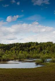В Карелии в реку Онда вылилось 200 килограммов технического масла